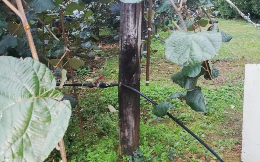 Monitorización y control de riego experimental en una plantación de kiwis para Hazi